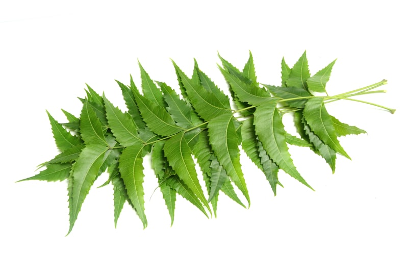 Benefits of Neem Leaves for the Hair
